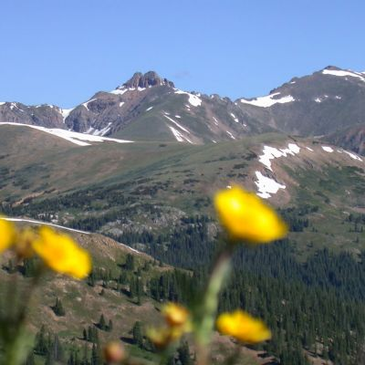 AU06  A  Mountains   Flowers   Loveland Pass
